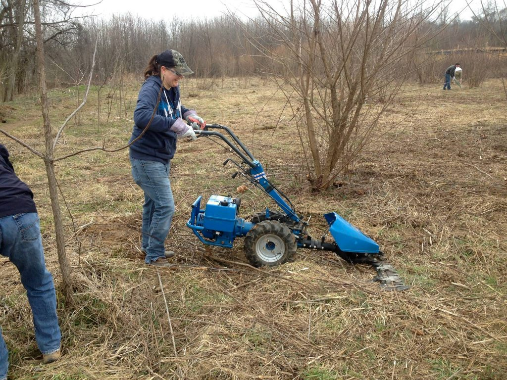 Volunteers clearing invasive plant species using mechanical methods